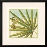 Peacock Palm V