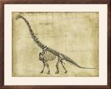 Brachiosaurus Study