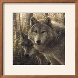 Woodland Companions