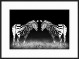 Black and White Mirrored Zebras