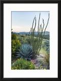 Jeff Davis County  Texas Davis Mountains and Desert Vegetation