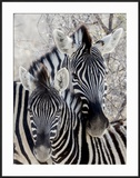 Namibia  Etosha National Park Portrait of Two Zebras