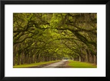 Georgia  Savannah  Mile Long Oak Drive at Historic Wormsloe Plantation