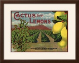 Cactus Brand - Highland  California - Citrus Crate Label