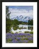 Lupine Flowers with the Teton Mountains in the Background