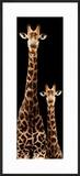 Safari Profile Collection - Giraffe and Baby Black Edition III
