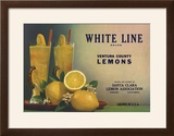 White Line Brand - Oxnard  California - Citrus Crate Label