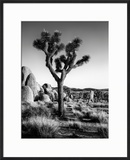 USA  California  Joshua Tree National Park at Hidden Valley