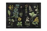 Botanical Floral Chart I Black and White