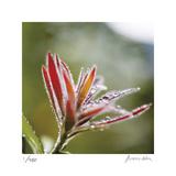 Botanical 2