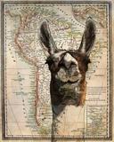 South America Llama Map