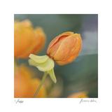 Summer Bloom 2