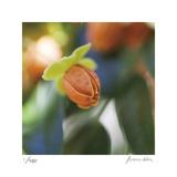 Summer Bloom 1
