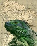 Brazilian Iguana