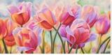 Tulips in Wonderland
