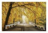 Bridge to Fall III