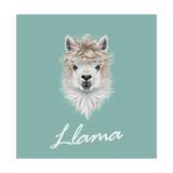 Llama Animal Portrait