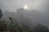 Redwood Park Fog And Sun Morning 2