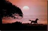 Running Horse At Sunset