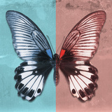 Miss Butterfly Agenor Sq - Turquoise & Red