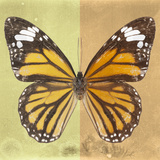 Miss Butterfly Genutia Sq - Yellow & Honey