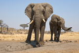 Two Elephants Stand Around A Water Hole