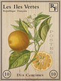 French Stamp - Orange