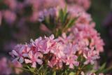 Floral Meander