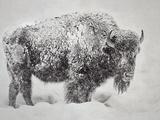In the Storm Reproduction d'art par Wink Gaines