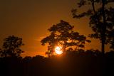 Sunrise Over Kaziranga National Park