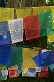 Prayer Flags Hung Along A Road In Sikkim  India