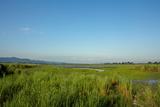 Clear Skies Over A Marsh In Kaziranga National Park