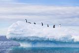 Penguins On Top Of An Iceberg In Antarctica