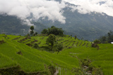 Terraced Rice Paddies In Sikkim  India