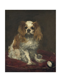 A King Charles Spaniel  c1866