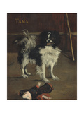 Tama  the Japanese Dog  c1875