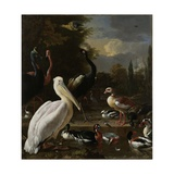 A Pelican and other Birds near a Pool  Known as 'The Floating Feather'  c1680