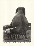 My Pal the Elephant (Large)