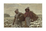 The Cotton Pickers  1876