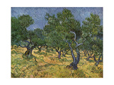 Olive Orchard Mid-June  1889