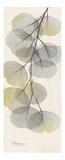 Eucalyptus Sunshine 3