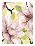 Blush Magnolia I