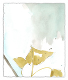 Ginkgo on Dusty Teal III