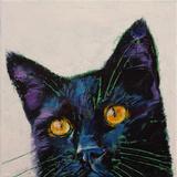 Killer Black Cat