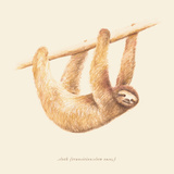 Css Animals Sloth