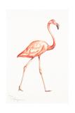 Flamingo Duo I
