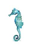 Aqua Creatures II