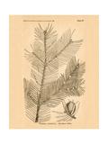 Vintage Botanical IX
