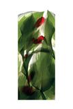 Hosta Begonia Window
