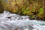 Rainforest River I